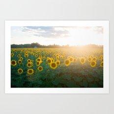 Sunflower Day Art Print