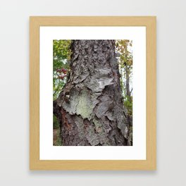 OLD BARK (Whiting Road Nature Preserve, Webster, NY) Framed Art Print