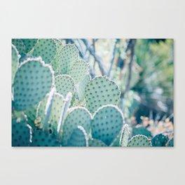 Paddle Cactus Canvas Print
