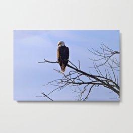 Good Morning, Eagle! Metal Print