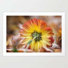 Chrysanthemum Underside Art Print