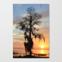 Sunrise Cypress Canvas Print