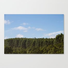 Hamakua Ranch. Canvas Print