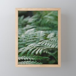 Fern leaf macro photography Framed Mini Art Print
