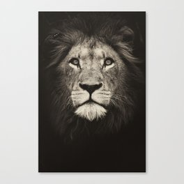 Mr. Lion King Canvas Print