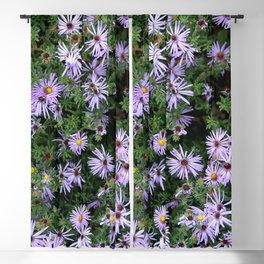Fall Asters Blackout Curtain