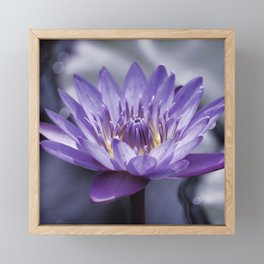 Purple Water Lily Framed Mini Art Print