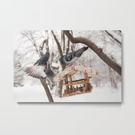 Three hungry pigeons on bird feeder Metal Print