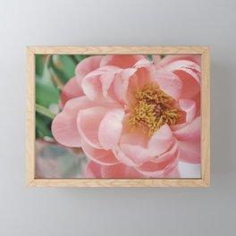 Details of Pink Flower | Fine-Art Nature Photography | Pastel Photo Print Framed Mini Art Print