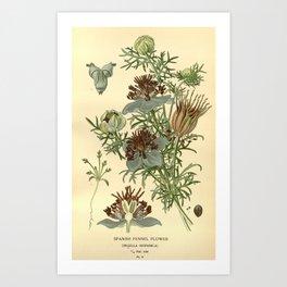 Spanish Fennel Flower Art Print