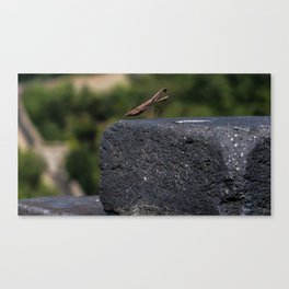Praying Mantis of the Great Wall Canvas Print