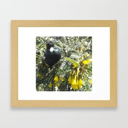 Tui with Kowhai Framed Art Print