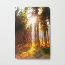 Sunshine forest Metal Print