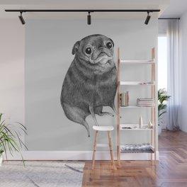 Sweet Black Pug Wall Mural