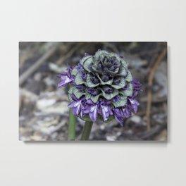 Zebra Flower Metal Print