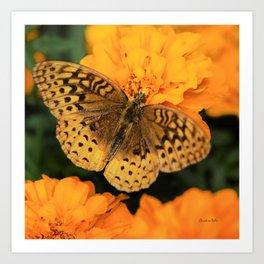 Butterfly on Marigolds Art Print