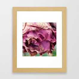 Sun dried rose Framed Art Print
