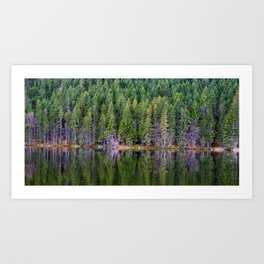 forest above and below Art Print