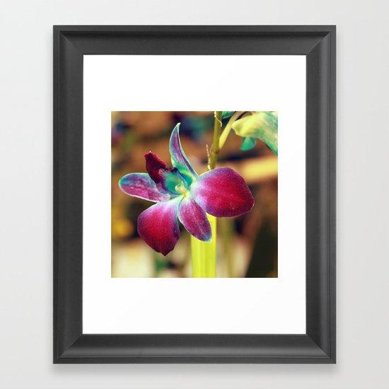 Dendrobium Orchid Framed Art Print