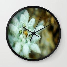 Nuts in a jar Wall Clock