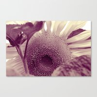 sunflower Canvas Prints featuring Sunflower by Laake-Photos