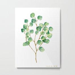 Eucalyptus 1 Metal Print