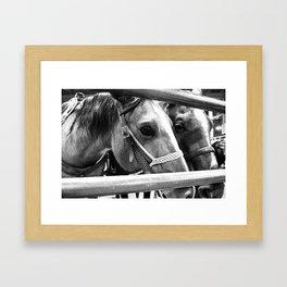 Rodeo Horses Framed Art Print