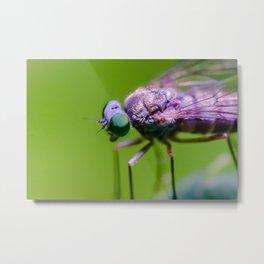Little Green Eye'd Fly. Macro Photograph Metal Print
