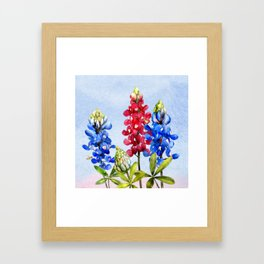 Bluebonnets 2 Framed Art Print