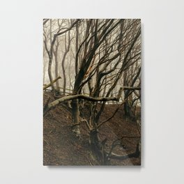 ENCHANTED FOREST / 01 Metal Print