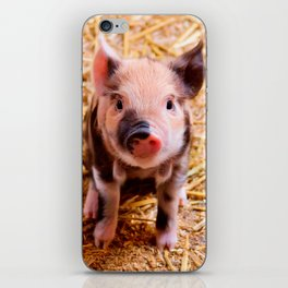 Cute Baby Piglet Farm Animals Babies iPhone Skin
