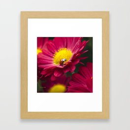 Little Red Ladybug Framed Art Print