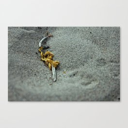 Discarded Flower Canvas Print