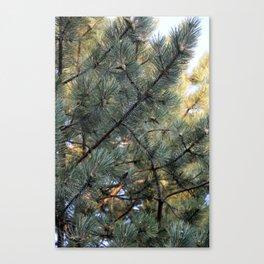 sun pine Canvas Print