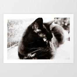 her majesty the cat Art Print