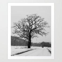 Winter Oak Art Print