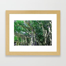 Bewitching Banyon Framed Art Print