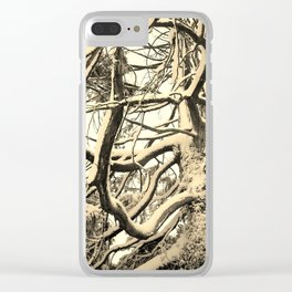 SNOW DUSTED CEDAR BRANCHES Clear iPhone Case