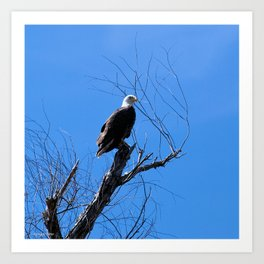 Clear Sight (Bald Eagle) Art Print