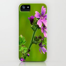 Common Mallow (Cheeseweed) iPhone Case