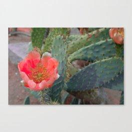Desert Heat 3 Canvas Print