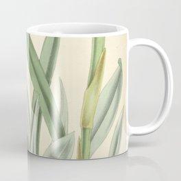 Miltonia flava (as Miltonia anceps) Curtis' 92 (Ser. 3 no. 22) pl. 5572 (1866) Coffee Mug
