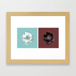 Not a single red rose anywhere! Framed Art Print