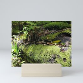 Rainforest Ferns & Moss Mini Art Print