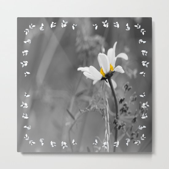 White daisy on a grey day Metal Print