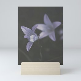 Botanical Still Life Photography Lily Wildflower Mini Art Print
