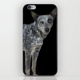 Australian Cattle Dog iPhone Skin