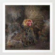 Little Brown Hen Art Print