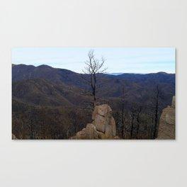 Monjeau Tree Canvas Print