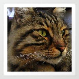 Aslan The Long Haired Tabby Cat Art Print